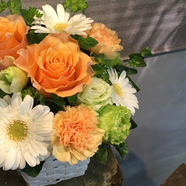 2TONE-MIX   [Orange&White]